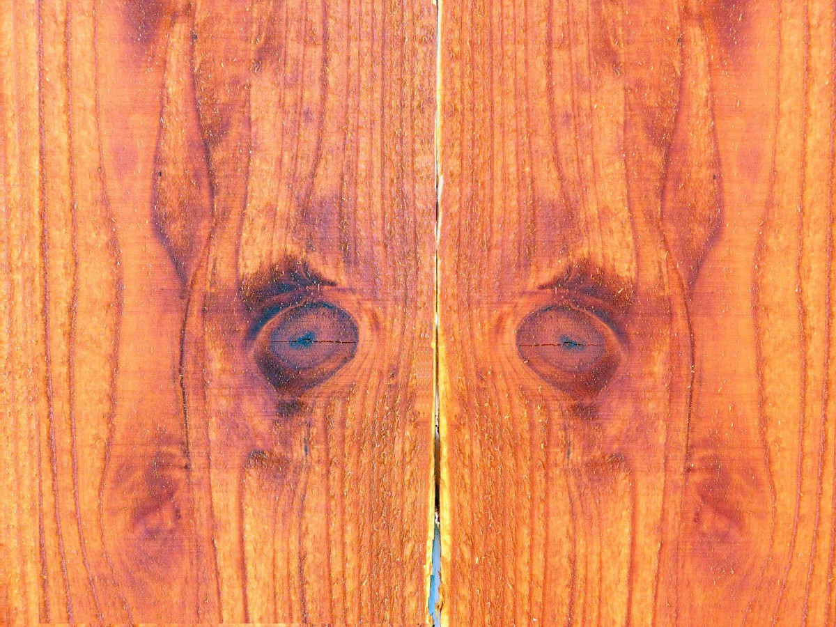 птичий глаз