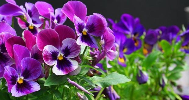 Оригинальный декор: подвесные сады с живыми растениями для дома и дачи